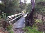 IMG_0367 woody path